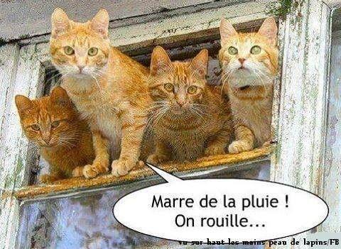 Bon Dimanche  Dba428b2